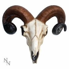 More details for large 33cm rams skull head wall mount hanging ornament nemesis now