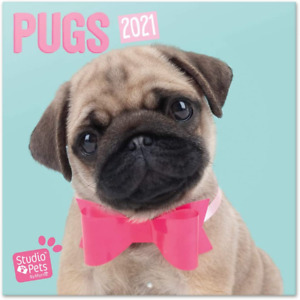 Official Studio Pets Pugs 2021 Wall Calendar 11.8 x 11.8 inches (16 Months) Fami