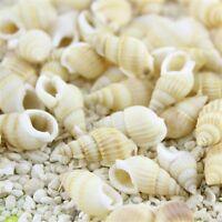 100 pcs Mixed Natural Spiral Shells Seashells Beads Craft Decor Beach Wedding