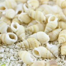 100 pcs Mixed Natural Spiral Shells Seashells Beads Craft Decor Beach Wedding