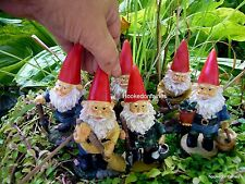 Miniature Fairy Garden Gnome Travelocity look alike Gnome w Pick MR