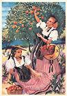 NICE côte d'azur la cueillette des oranges costumes folklore