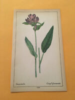KU) 1878 Botanique Pratique Campanula Flower Botany Original Colored Print