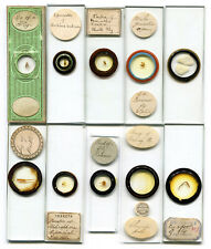 10 Insect Victorian/Edwardian Professional & Amateur Microscope Slides