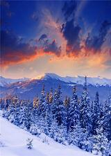 Winter Scenic Vinyl Photo Backdrop Snow Tree Studio Photography Background 5x7ft
