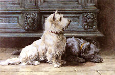 CAIRN WEST HIGHLAND WHITE SCOTTISH TERRIER DOG FINE ART ENGRAVING PRINT  Dicksee