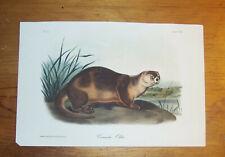Audubon. Quadrupeds. Octavo. Canada Otter.