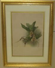 Antique HENRY GEORGE MOON 'Masdevallia DRACULA ORCHIDS' Flower CHROMOLITHOGRAPH