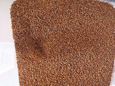 Cameline - Camelina Sativa 200 semillas sesamo bastardo alimento tortugas