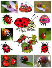 LADYBUG PHOTO-FRIDGE MAGNETS (14 IMAGES)
