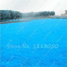 500pcs Rare Blue Grass Seed, Lawn Seed, Outdoor Plant Seed Germination Rate 100%