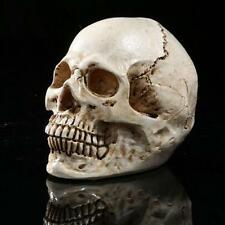 Skull Gothic Ornament Figurine Human Skeleton Head Halloween Decoration White
