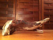 "Beautiful 11"" Driftwood Art Terrarium Taxidermy Aquarium Beach Reptile Decor"