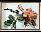 IMAGE AU BON MARCHE / GRANDE CHROMO / FLEUR ROSE style Catharina KLEIN