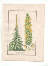 1832-34 Antique H/C print Verbascum Thapsus, Winkler Medical Botany