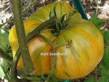 Amana Orange Tomato - A Mild, Sweet, Tropical Flavoured Beefsteak Type Tomato!!!
