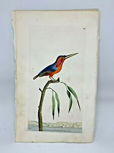 Minute Kingfisher - 1783 RARE SHAW & NODDER Hand Colored Copper Engraving