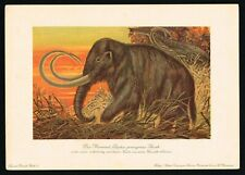 Woolly Mammoth, Prehistoric Extinct Elephant, Kakao Compagnie, F.John 1900