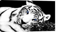"LARGE TIGER CANVAS PICTURE BLACK WHITE BLUE EYES 36""x20"