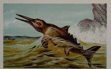 c1900 GERMAN PRINT ICHTHYOSAURUS PREHISTORIC DINOSAUR ANIMAL Tiere der Urwelt