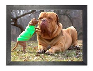 Bullmastiff With Chihuahua Brown Domestic Dog Cute Sweet Animal Poster Photo