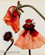 1980 Vintage IRVING PENN Botanical POPPY FLOWER Photo Engraving Fine Art 11x14