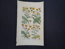 Sir John Hill, Botanical, The Vegetable System 1761-1775 Sow Thistle #25