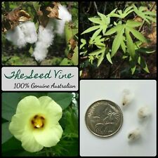 10+ COTTON TREE SEEDS (Gossypium arboreum) Annual Tropical Flower India