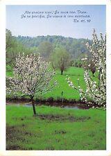 B52117 fleurs flowers paysage de printemps