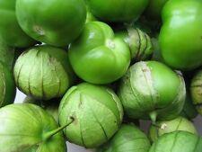 V235B Tomatillo Verde Green x100 Bulk seeds Husk Tomato Vegetable Garden