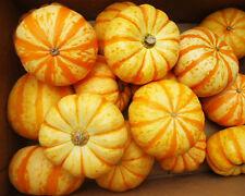 Pumpkin Seed 8 Seeds Abalone Pumpkin Cucurbita Vegetable Garden Seeds Hot B031