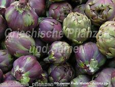 Artischocke rot 10 Semillas PERENNE cocina mediterránea sano Verdura fina