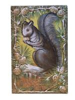Thanksgiving Postcard, Squirrel Eats Nuts Acorn Pine Antique Postcard~s-592