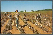 Cotton Pickin' Time ~ farmers crop gatherers ~ 1950s unused postcard