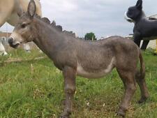 Esel stehend 60cm x 50cm Gartendekoration Dekofigur Skulptur Pferd EZEL Pony NEU
