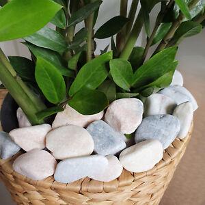 Premium Pastel Pink Grey White Marble Pebbles Stones Pot Toppers Décor Garden