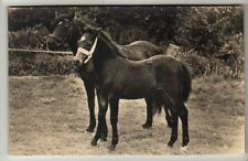 Horse Real Photographic (RP) Collectable Animal Postcards