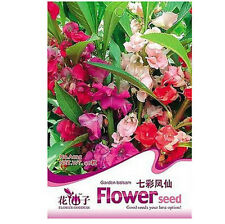 FD1632 Colorful Garden Balsam Seed Impatiens Balsamina RARE ~1 Pack 60 Seeds~