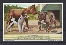 Rare 1950s Dutch Leibig Dog Art Card ENGLISH BULLDOG BOXER WIRE FOX TERRIER