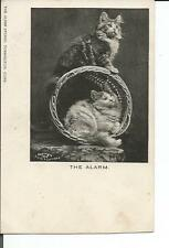 2 POSTCARDS PLAYFUL KITTENS IN BASKET 1902 ALBEE & BERTRAND CONN