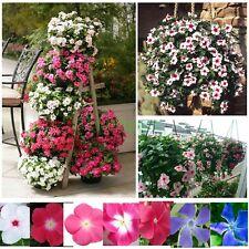 7 Colors Vinca Madagascar Rosy Periwinkle Flower Seeds Mix Catharanthus 140 PCS