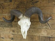 Wall Hanging Ram Skull Sculpture Large Head Replica Trophy Statue