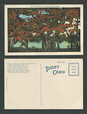 1920s Royal Poinciana Trees In Bloom Florida Postcard