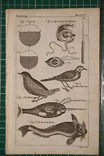 1764 Antiguo impresión ~ ullage ~ Wren Unicorn peces el narval Bailarina unguis Ojos