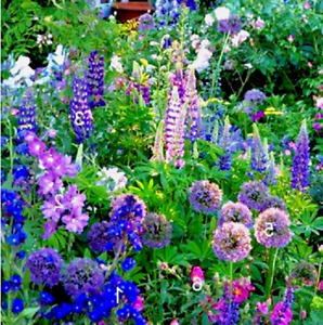Cottage Flower Garden Seed Mix - 500+ Seeds / 15+ Mixed Heirloom Varieties