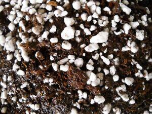 ORGANIC Potting Soil Mix Sphagnum Peat Moss 50% & Perlite 50% - 5 cups