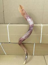 "Kudu Yemenite Shofar Horn Kosher Judaica Full Polished Israel XXXL 46-48"" +Gift"