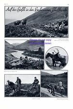 Deer hunting in Scottland 1929 XL page with 5 images moor hunter +
