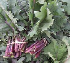 Red Russian Kale 500 seeds * Non GMO* EZ grow E86
