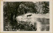 A Cow Crossing Piney River Near Houston Missouri Mo Rppc Photo Postcard B14